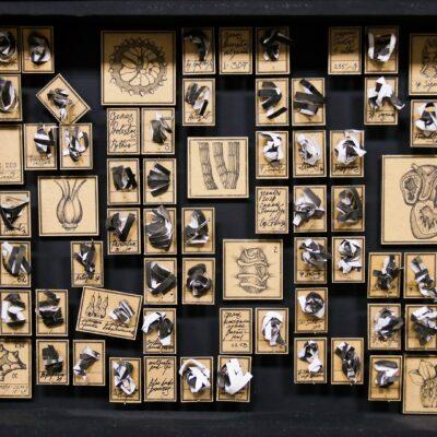 Музей чепухи, из 16 коробок, коробка 30х40 см, бумага, тушь, энтомологические булавки, 2020-2021